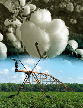 Cotton & Irrigator